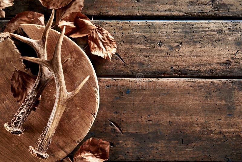 Ελαφόκερες ελαφιών με τα φύλλα στον ξύλινο πίνακα στοκ εικόνες