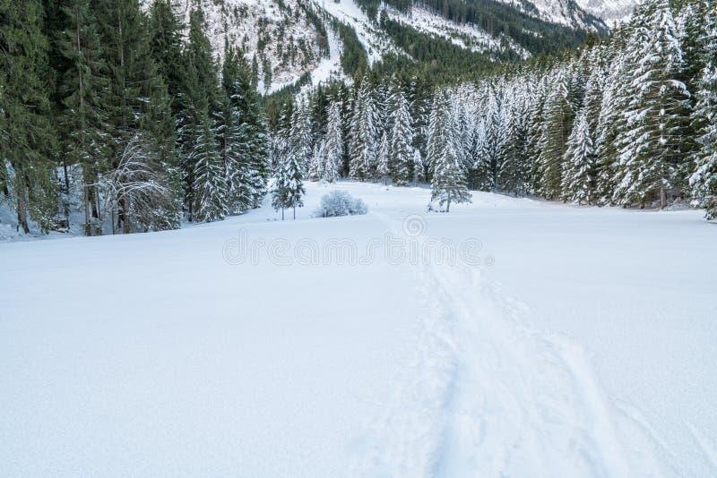 Ελβετικός χειμώνας - δάσος που καλύπτεται στο χιόνι στοκ φωτογραφία