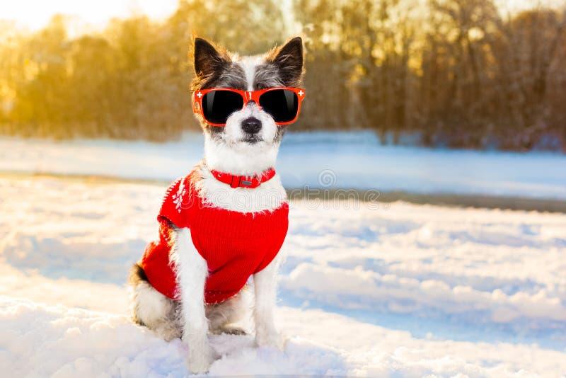 Ελβετικός χειμώνας σκυλιών στοκ φωτογραφία με δικαίωμα ελεύθερης χρήσης