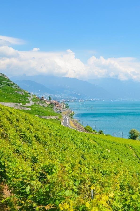 Ζάλη των terraced αμπελώνων στους λόφους από τη λίμνη της Γενεύης, Ελβετία Διάσημη περιοχή κρασιού Lavaux, κληρονομιά της ΟΥΝΕΣΚΟ στοκ εικόνες
