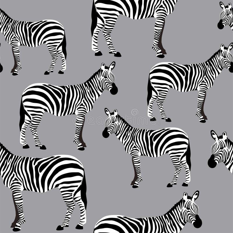 Ζέβες άνευ ραφής σχέδιο επιφάνειας, γραπτό υπόβαθρο Zebras για το υφαντικό σχέδιο, εκτύπωση υφάσματος, στάσιμος, συσκευασία, τοίχ στοκ εικόνες