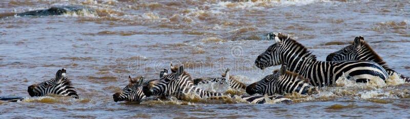 Ζέβες πέρασμα ομάδας ο ποταμός Mara Κένυα Τανζανία Εθνικό πάρκο serengeti Maasai Mara στοκ φωτογραφίες