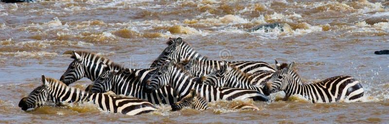Ζέβες πέρασμα ομάδας ο ποταμός Mara Κένυα Τανζανία Εθνικό πάρκο serengeti Maasai Mara στοκ εικόνες