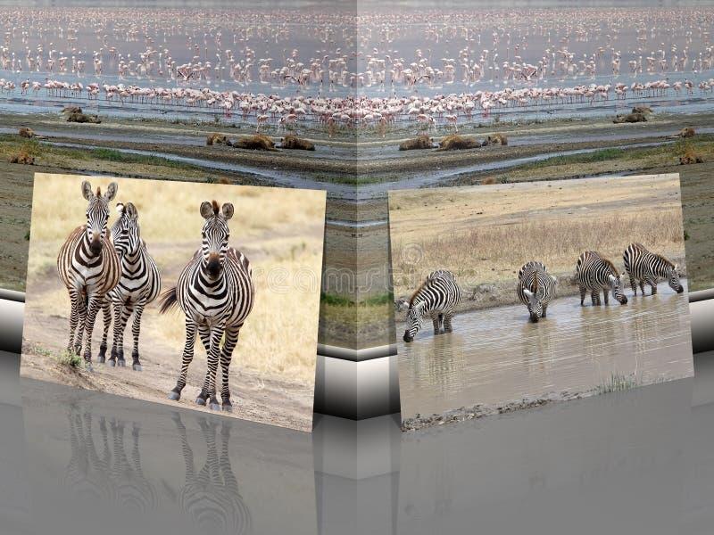 Ζέβες burchellii Equus με το αφρικανικό τοπίο σαβανών διανυσματική απεικόνιση