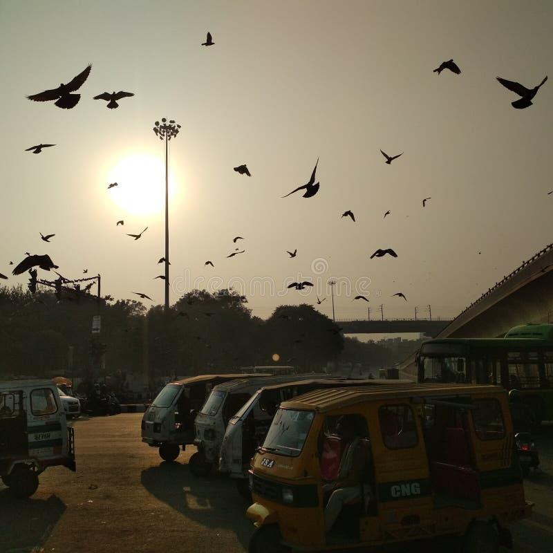 Ζήστε ελεύθερος όπως το πουλί στοκ φωτογραφίες