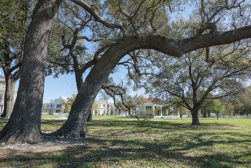 Ζήστε δρύινο δέντρο στοκ φωτογραφία με δικαίωμα ελεύθερης χρήσης