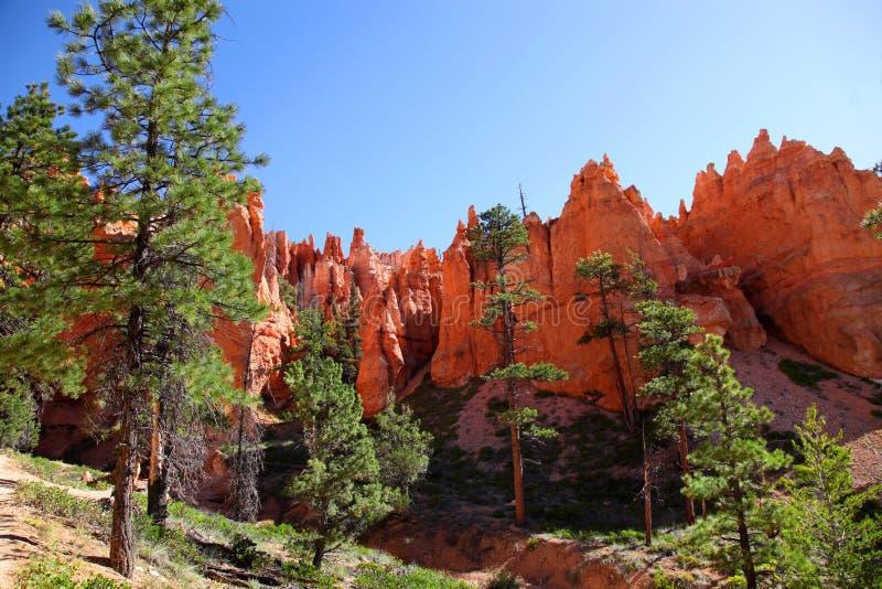 Ζαλίζοντας σχηματισμοί βράχου και πεύκα ponderosa στο εθνικό πάρκο φαραγγιών του Bryce στοκ φωτογραφίες