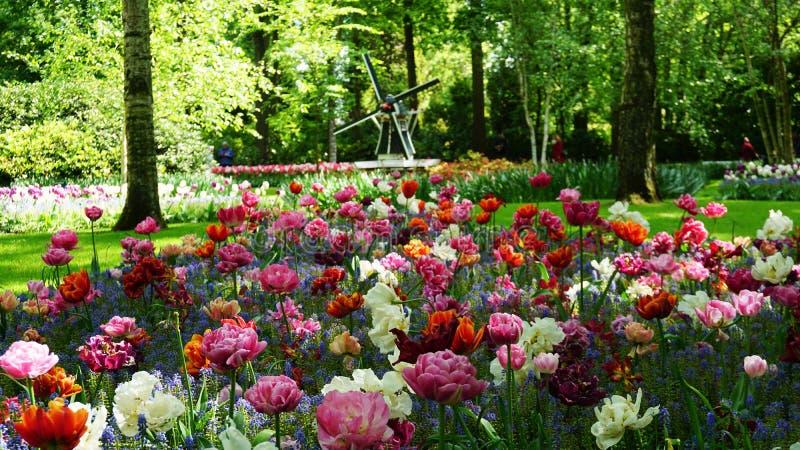 Ζαλίζοντας τοπίο άνοιξη, διάσημος κήπος Keukenhof με τις ζωηρόχρωμες φρέσκες τουλίπες, στοκ εικόνες