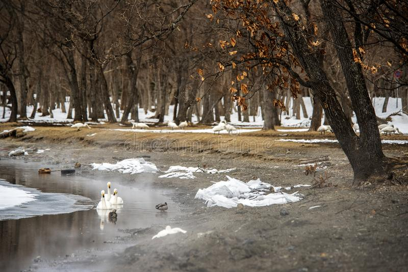 Ζαλίζοντας χειμερινή σκηνή στη λίμνη Kusharo, Hokkaiddo στοκ εικόνα