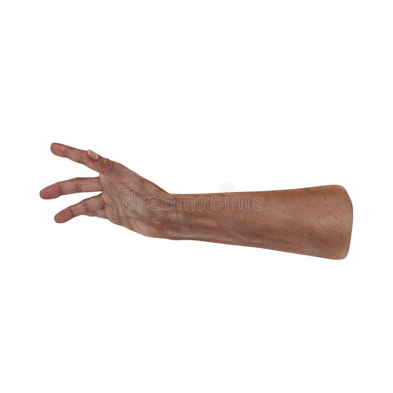 Ζαρωμένος στο παλαιό δέρμα χεριών ατόμων στο λευκό τρισδιάστατη απεικόνιση ελεύθερη απεικόνιση δικαιώματος