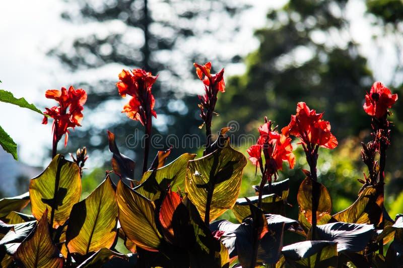 Ζαλίζοντας λουλούδια στους βοτανικούς κήπους στοκ φωτογραφίες με δικαίωμα ελεύθερης χρήσης