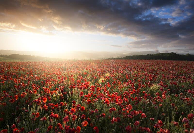 Ζαλίζοντας τοπίο τομέων παπαρουνών κάτω από τον ουρανό θερινού ηλιοβασιλέματος στοκ εικόνες