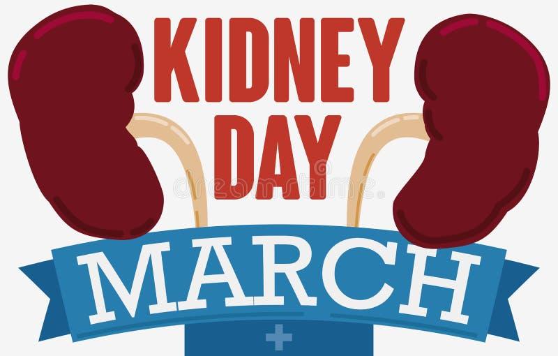 Ζευγάρι των νεφρών με την κορδέλλα χαιρετισμού για την ημέρα νεφρών, διανυσματική απεικόνιση ελεύθερη απεικόνιση δικαιώματος