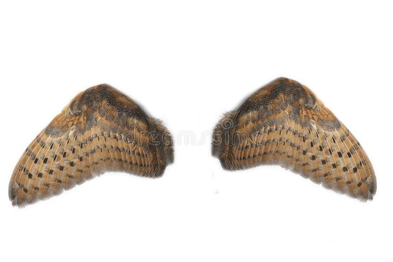 Ζευγάρι των φτερών κουκουβαγιών στοκ εικόνα με δικαίωμα ελεύθερης χρήσης