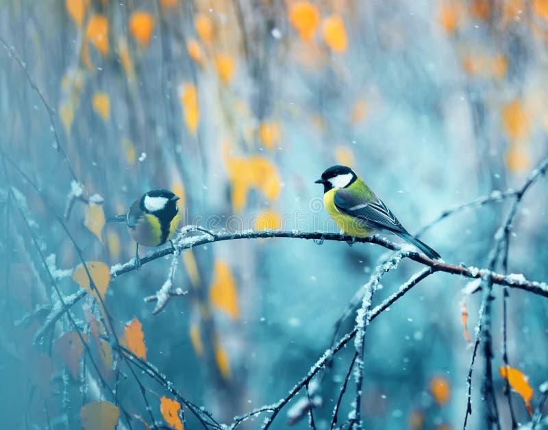 Ζευγάρι των chickadees που κάθονται στο πάρκο σε έναν κλάδο μεταξύ φωτεινού στοκ εικόνα με δικαίωμα ελεύθερης χρήσης