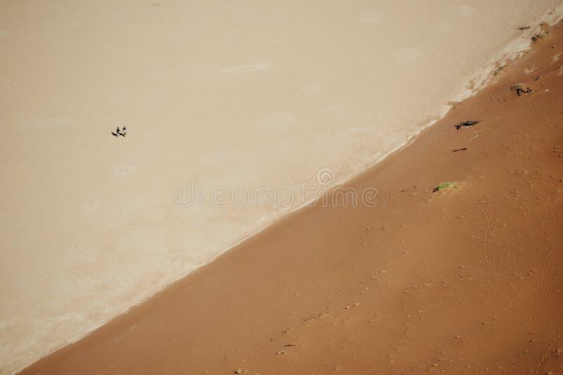 Ζεύγος στην έρημο στοκ φωτογραφία