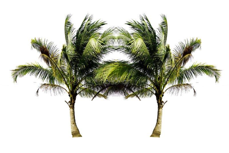 Ζεύγος των δέντρων καρύδων που μεγαλώνουν στην παραλία που απομονώνετ στοκ εικόνες