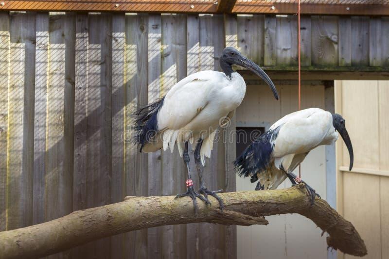 Ζεύγος των πουλιών στοκ εικόνες