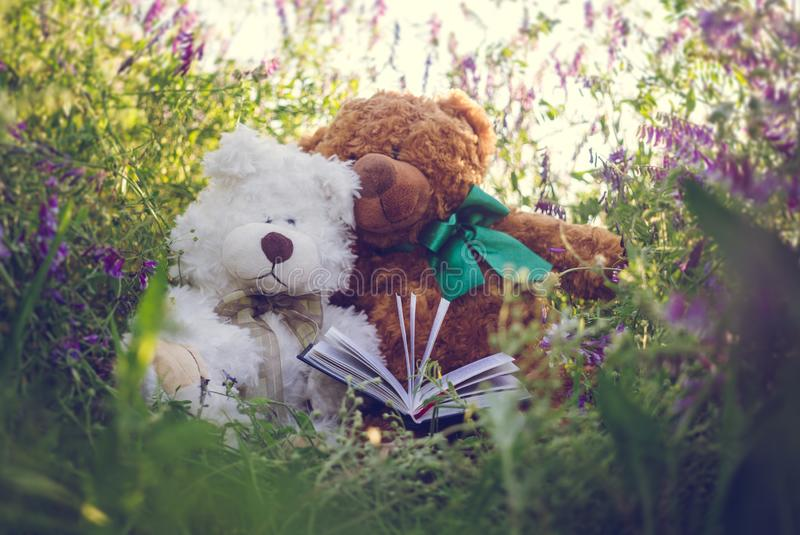 Ζεύγος των χαριτωμένων teddy αρκούδων ερωτευμένων σε ένα ηλιόλουστο θερινό λιβάδι στοκ εικόνα με δικαίωμα ελεύθερης χρήσης