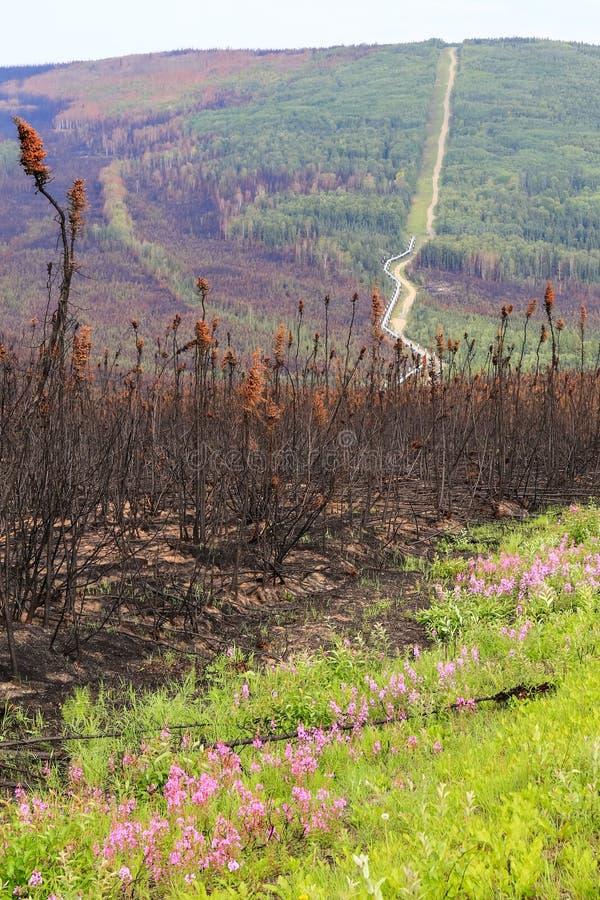 Ζημία λουλουδιών και πυρκαγιάς σωληνώσεων Αλάσκα - δια-Αλάσκα στοκ εικόνες