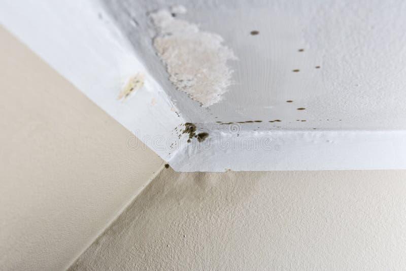 Ζημία που προκαλείται από την υγρασία σε έναν τοίχο στο εσωτερικό στοκ εικόνα