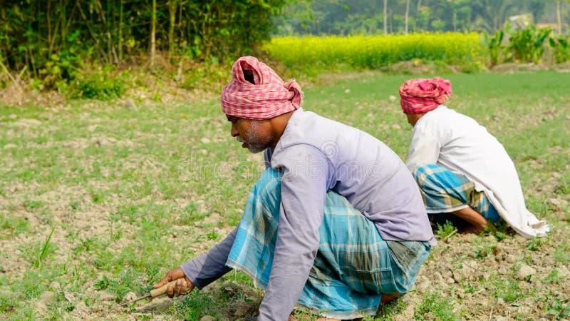 Ζιζάνια καθαρίσματος από το αγρόκτημά τους στοκ εικόνα