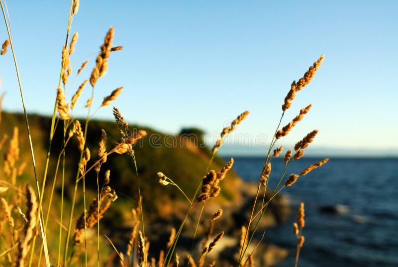 ζιζάνια φθινοπώρου στοκ εικόνες με δικαίωμα ελεύθερης χρήσης