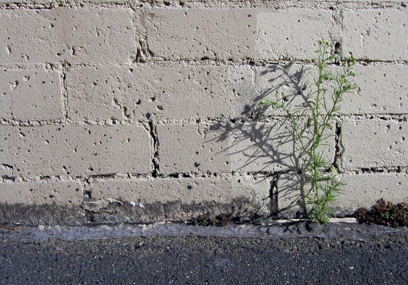 ζιζάνιο χώρων στάθμευσης μ& Στοκ Φωτογραφίες