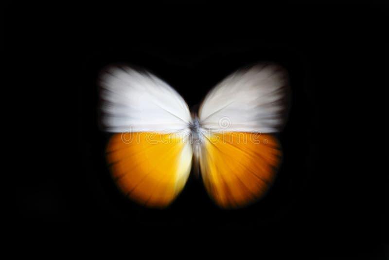 ζουμ πεταλούδων στοκ εικόνες