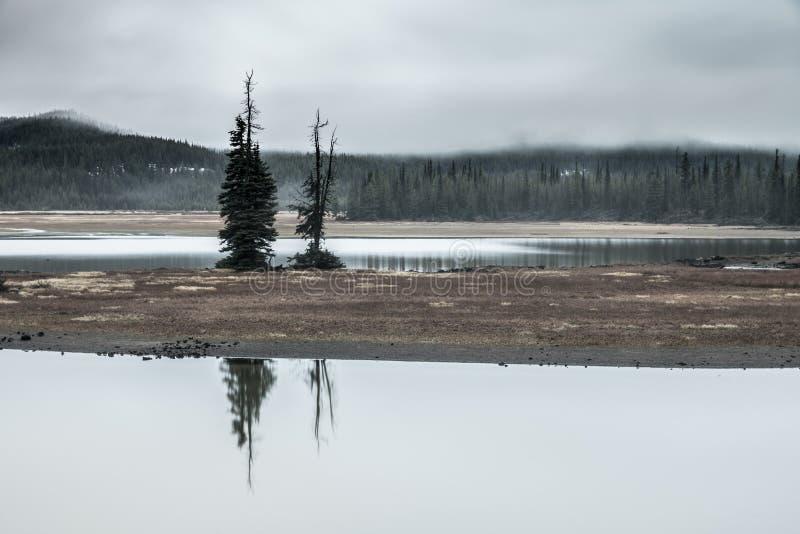 Ζοφερά δέντρα στοκ φωτογραφίες