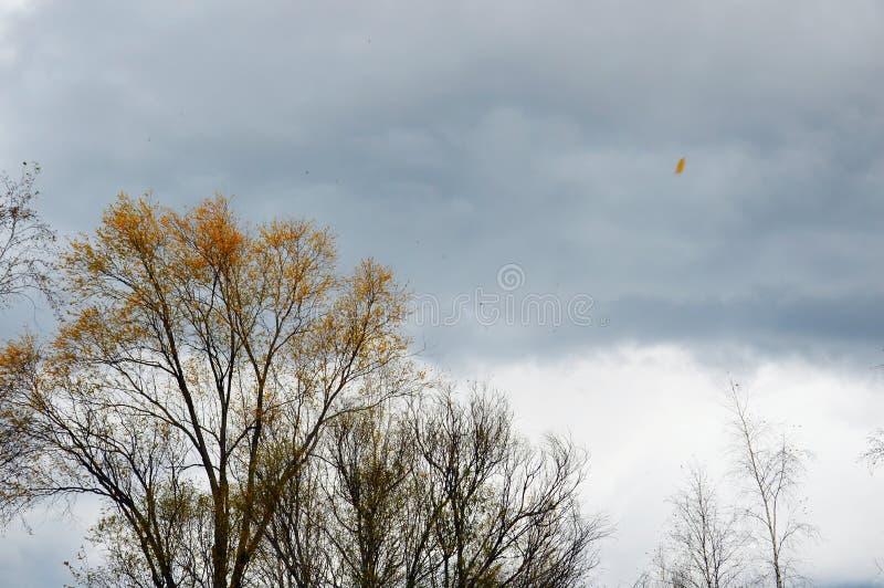 Ζοφερός υπερβολή φθινοπωρινός ουρανός Ο άνεμος φύσηξε και τα φύλλα πετούσαν από τα δέντρα στοκ φωτογραφία με δικαίωμα ελεύθερης χρήσης