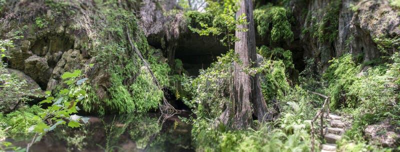 Ζούγκλα ή δάσος στοκ εικόνα