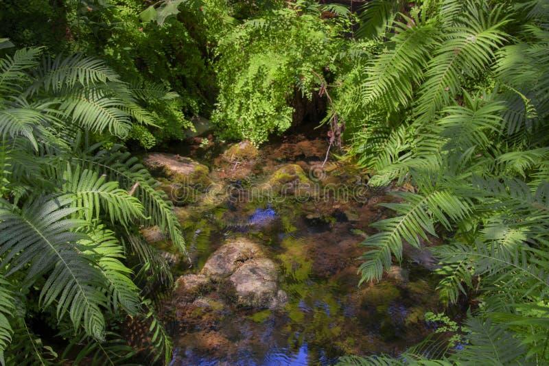 Ζούγκλα ή δάσος στοκ φωτογραφίες με δικαίωμα ελεύθερης χρήσης