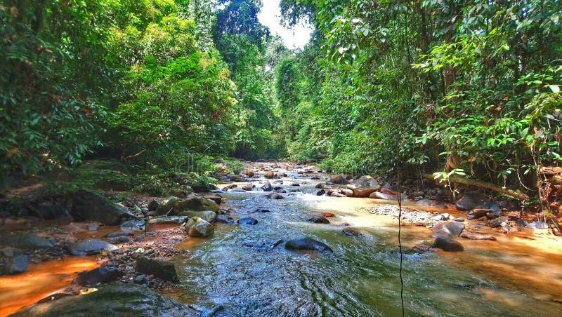Ζούγκλα και ποταμός στοκ εικόνες με δικαίωμα ελεύθερης χρήσης