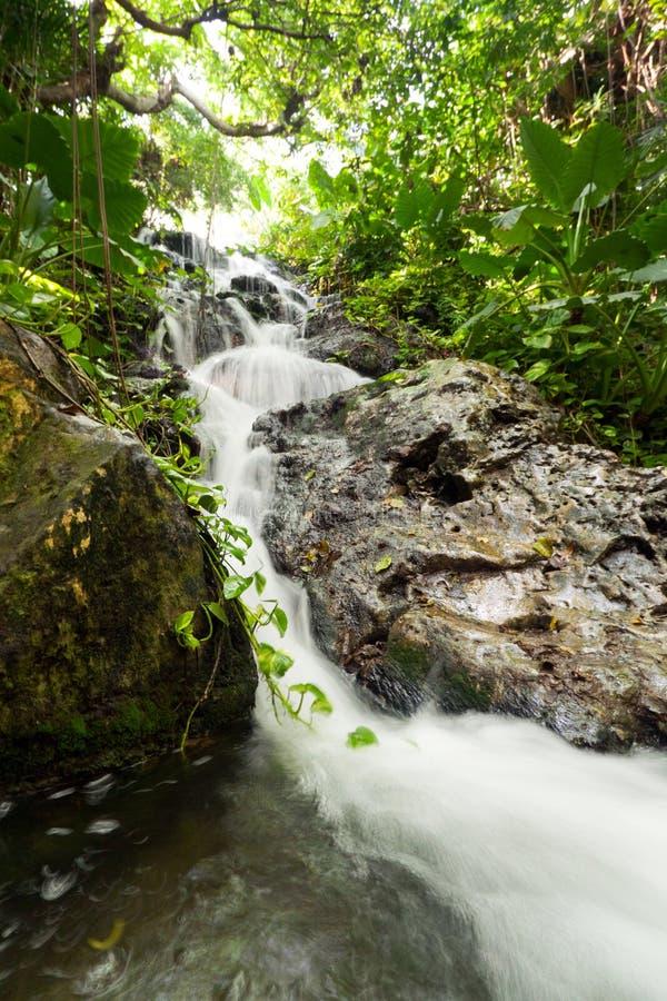 ζούγκλα μεξικανός καταρ&r στοκ φωτογραφία με δικαίωμα ελεύθερης χρήσης