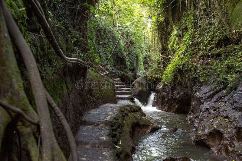 Ζούγκλα πορειών στοκ φωτογραφία με δικαίωμα ελεύθερης χρήσης