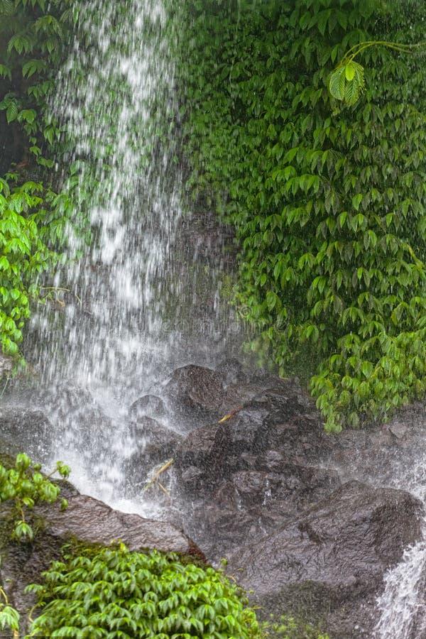 ζούγκλα πτώσεων στοκ εικόνες