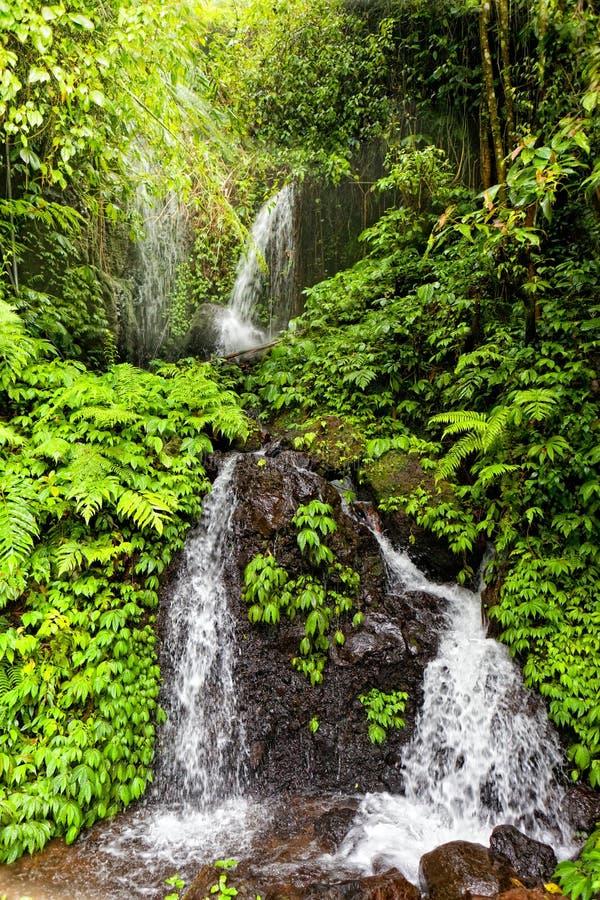 ζούγκλα πτώσεων στοκ εικόνα με δικαίωμα ελεύθερης χρήσης