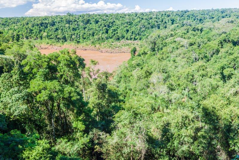Ζούγκλα στο εθνικό πάρκο Iguazu στοκ εικόνες με δικαίωμα ελεύθερης χρήσης