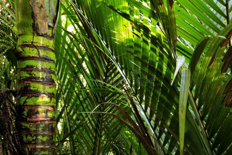 ζούγκλα στοκ φωτογραφίες