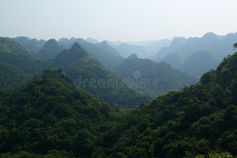ζούγκλα στοκ εικόνα