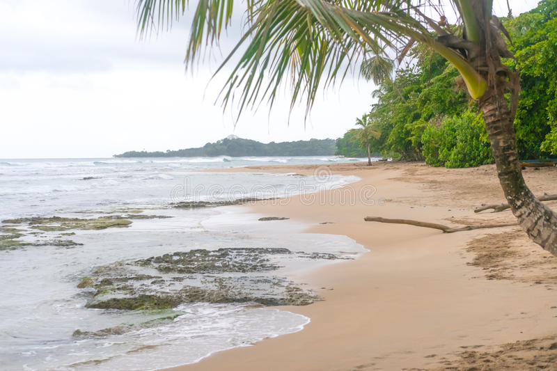 Ζούγκλα καραϊβικό Puerto Viejo της Κόστα Ρίκα φοινίκων εξωτικό στοκ φωτογραφία