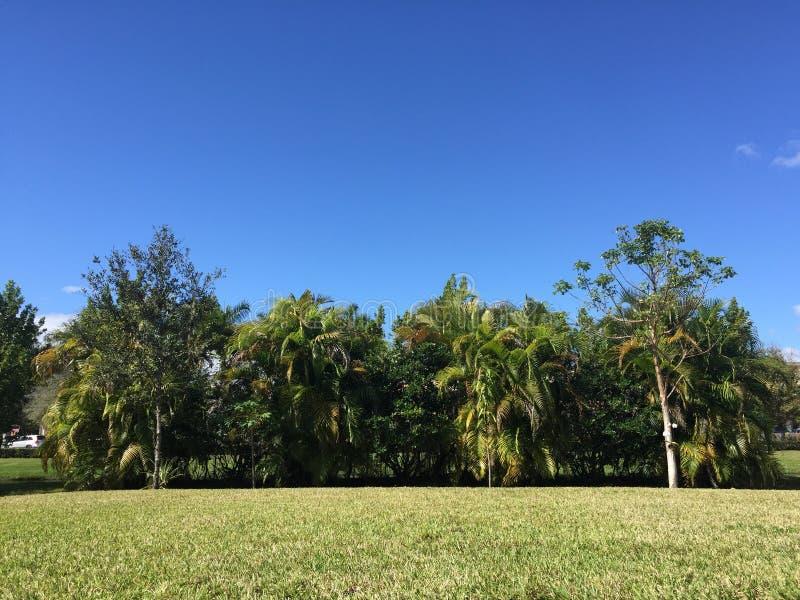 Ζούγκλα κατωφλιών στοκ εικόνες με δικαίωμα ελεύθερης χρήσης