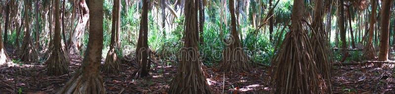 Ζούγκλα σε Zanzibar στοκ εικόνα