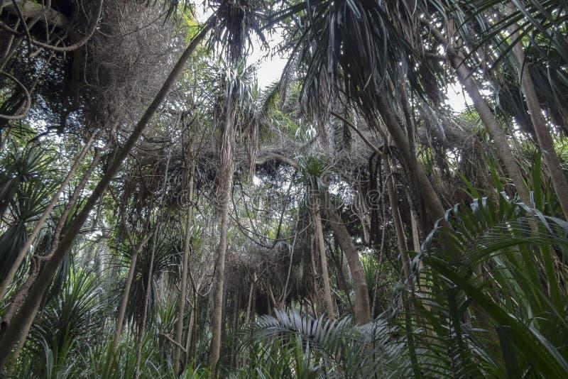 Ζούγκλα σε Zanzibar στοκ φωτογραφία με δικαίωμα ελεύθερης χρήσης