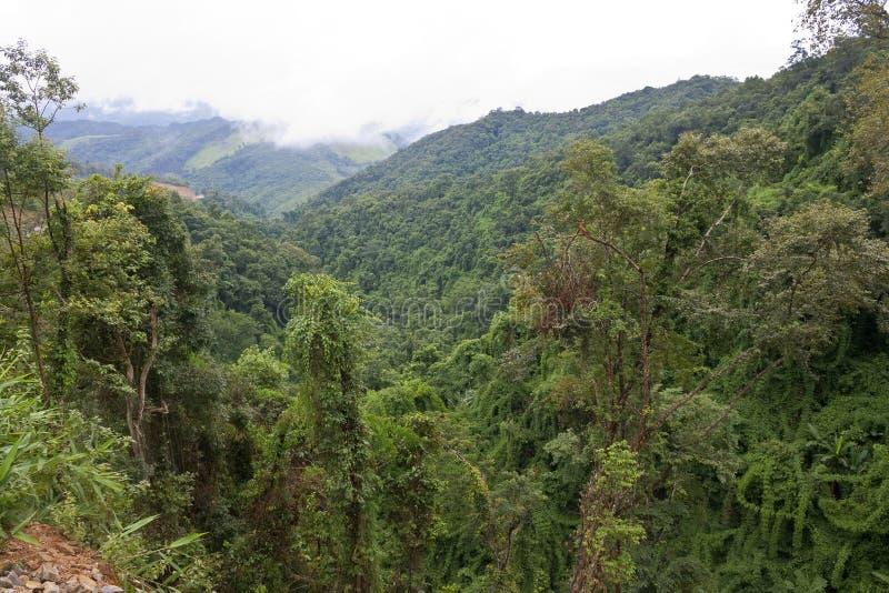 Ζούγκλα στην υδρονέφωση mornig στοκ εικόνα