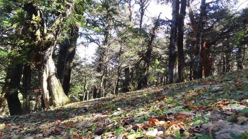 Ζούγκλα στο χρώμα στοκ φωτογραφία με δικαίωμα ελεύθερης χρήσης
