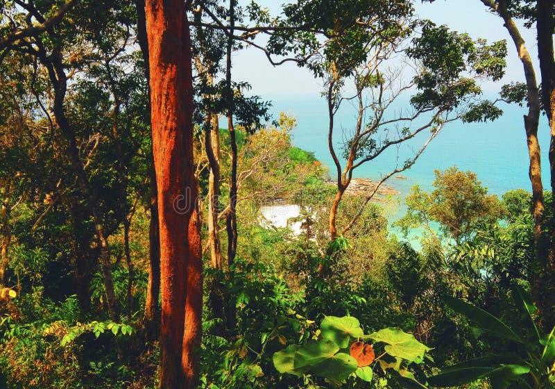 ζούγκλα Ταϊλανδός στοκ φωτογραφία