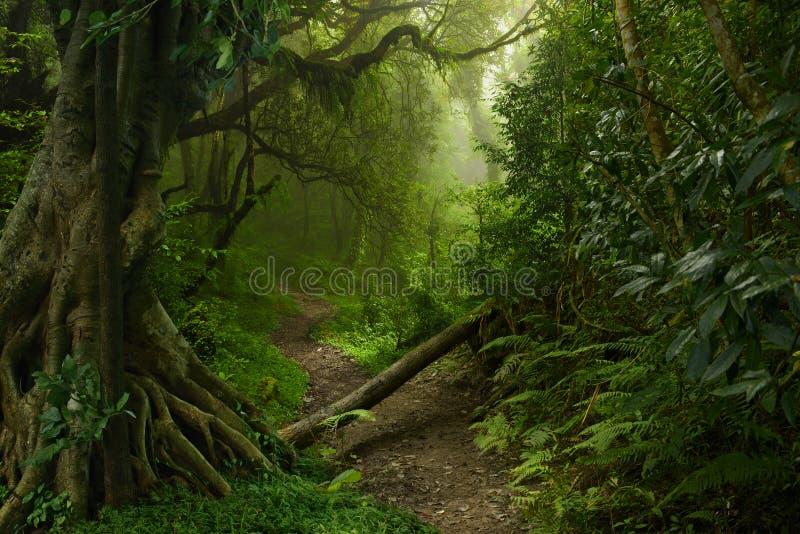 Ζούγκλα του Νεπάλ στοκ εικόνα