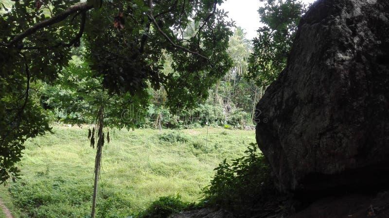 ζούγκλα φύσης στοκ φωτογραφία με δικαίωμα ελεύθερης χρήσης